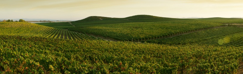 Мавруд настоящее болгарское вино